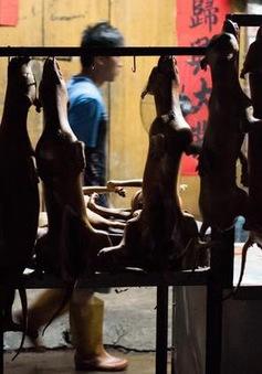 Đài Loan (Trung Quốc) cấm giết chó, mèo