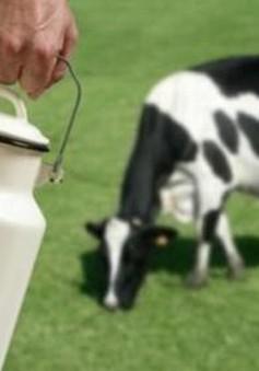Khủng hoảng sữa tại châu Âu chưa kết thúc