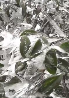 Mẫu Sơn lạnh -2 độ C, băng tuyết phủ trắng xóa