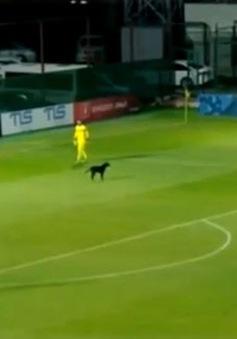 Chú chó gây gián đoạn trong một trận đấu bóng đá tại Gruzia