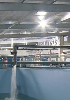 Ứng dụng công nghệ hiện đại xử lý nước - Hướng đi phát triển ngành tôm