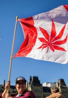 Canada trở thành quốc gia thứ hai hợp pháp hóa cần sa