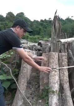 Phát hiện một cánh rừng bị tàn phá tan hoang ở Bình Phước
