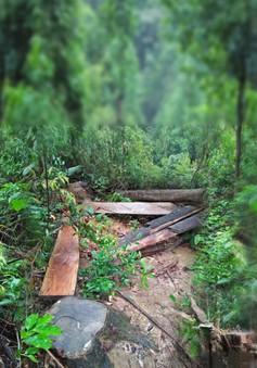 Kiên quyết xử lý phá rừng trái phép ở A Lưới - Thừa Thiên Huế