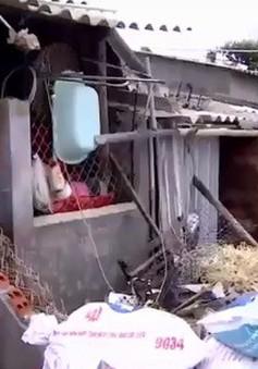 Phú Yên: Triều cường gây sập nhà dân