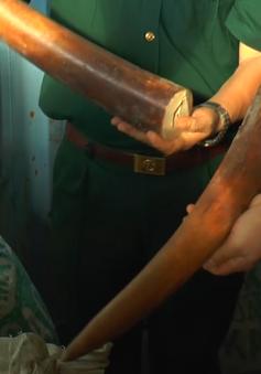Phó Thủ tướng biểu dương lực lượng ngăn chặn vận chuyển trái phép ngà voi, vảy tê tê