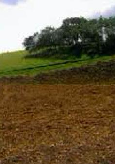 Lâm Đồng rà soát lại các tổ chức thuê đất để điều chỉnh, giải quyết theo quy định