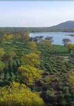 Rực rỡ hoa vàng trên cao nguyên xanh