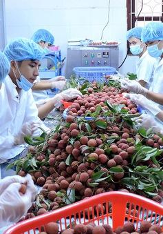 Xuất khẩu rau quả đạt 3,1 tỷ USD