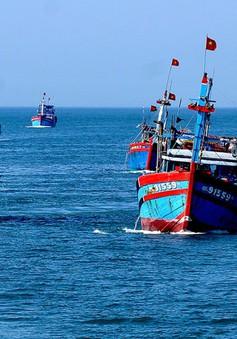 """Tàu cá Quảng Ngãi """"nói không"""" với đánh bắt trái pháp luật"""