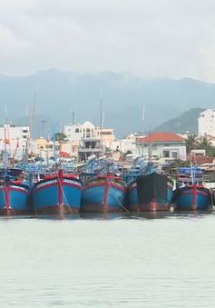 Thiếu lao động đi biển, nhiều chủ tàu phải chọn cả người nghiện ma tuý