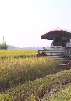 Đưa máy gặt ra đồng, người dân Phú Thọ bức xúc vì bị công an xã cản trở