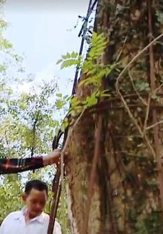 Thông tin Hà Nội đồng ý cho người dân bán gỗ sưa trăm tỷ đồng là thiếu chính xác