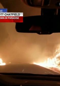 Người phụ nữ vừa lái xe, vừa cầu nguyện để thoát đám cháy rừng ở California