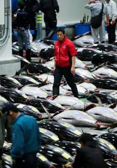 Sau 1 tháng mở cửa, chợ cá Tokyo có những thay đổi gì?