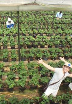 Du lịch canh nông - Mô hình thú vị thu hút khách tại Đà Lạt