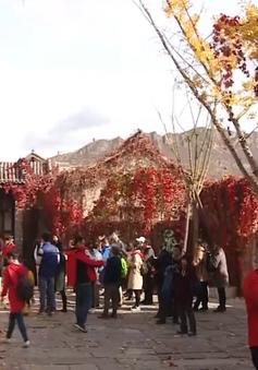 Mùa thu ngắm lá đỏ ở Cổ Trấn, Bắc Kinh