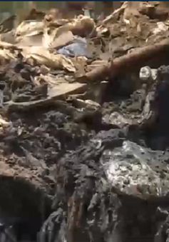 Bị phạt gần 500 triệu đồng vì đổ trộm chất thải nguy hại ra môi trường
