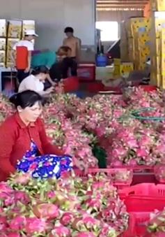 Gian nan xuất khẩu nông sản chính ngạch sang Trung Quốc