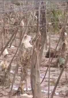 Ninh Thuận: Không để người dân thiếu đói sau lũ