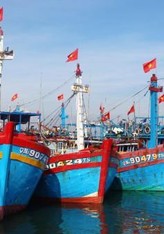 Khánh Hòa: Thu hồi nợ vay đóng mới, nâng cấp tàu cá theo NĐ 67