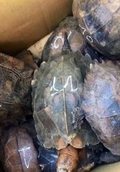 Phát hiện xe khách chở gần 500 kg rùa, rắn thuộc diện quý hiếm