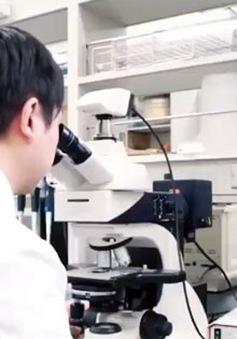 Xăng sinh học từ tảo biển