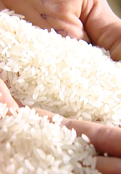 Quy định chặt chẽ về việc sử dụng thương hiệu gạo Việt Nam