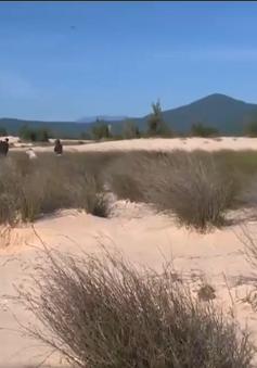 Cỏ năng miền gió cát - Thông điệp về sức sống dịệu kỳ