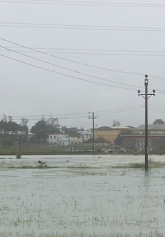 Vựa rau phục vụ tết Quảng Nam bị nhấn chìm trong biển nước do mưa lớn