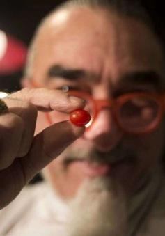 Israel phát triển thành công cà chua nhỏ nhất thế giới