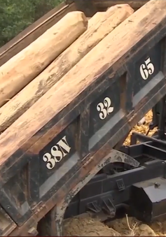 Hà Tĩnh: Phức tạp tình trạng vận chuyển gỗ lậu cuối năm