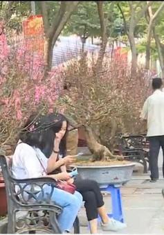 TP.HCM: Mai Tết mất mùa, hoa đào tràn ngập chợ hoa