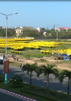 Sắc hoa vàng ngày Tết tràn ngập phố phường