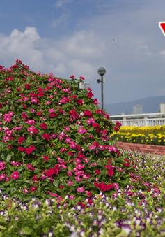 Rực rỡ đường hoa Tết Đà Nẵng trong ngày xuân