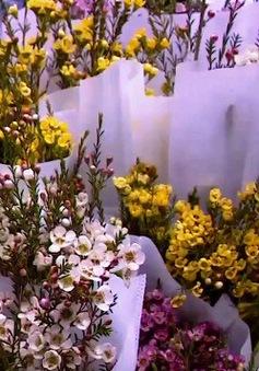 Chợ hoa phố cổ Hà Nội ngày cuối năm