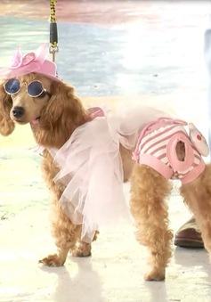 """Cuộc thi """"cún biểu diễn thời trang"""" tại Nha Trang"""