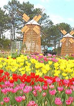 Sắc hoa Đà Lạt rực rỡ trong ngày Tết