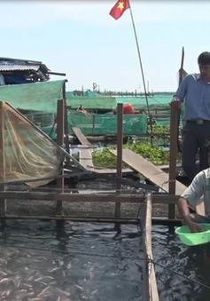 Quảng Nam tăng cường kiểm soát nuôi cá lồng bè