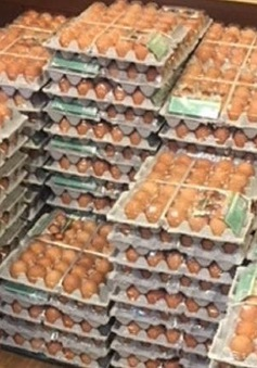 Đội tuyển Olympic Na Uy suýt phải ăn trứng trừ bữa do Google dịch sai