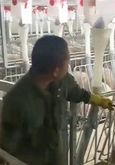 Nhà máy thịt lợn – mô hình chăn nuôi kiểu mới tại Trung Quốc