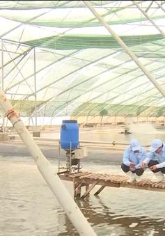 Tôm nguyên con của Việt Nam đủ điều kiện xuất khẩu vào thị trường Australia