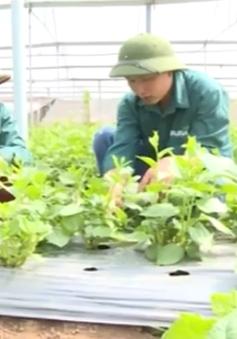 Hà Nội: Quy trình truy xuất nguồn gốc rau được thực hiện như thế nào?