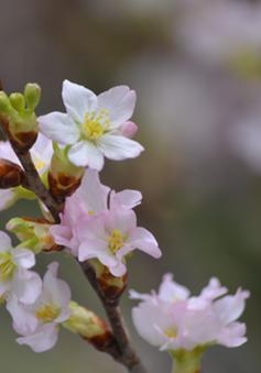 Cách giữ cho hoa tươi lâu trong dịp Tết