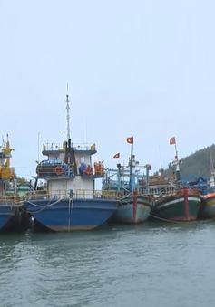 Tàu vỏ thép của Bình Định sẵn sàng vươn khơi trở lại
