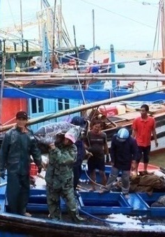 Ngư dân Phú Yên trúng đậm cá ngừ đại dương