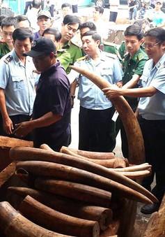 Công an Hà Nội triệt phá đường dây buôn bán ngà voi