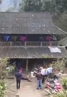 Lào Cai: Thiệt hại do giá rét lên đến hàng tỷ đồng