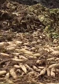 Bộ Nông nghiệp chỉ đạo xử lý vụ nông sản dư thừa phải đổ bỏ