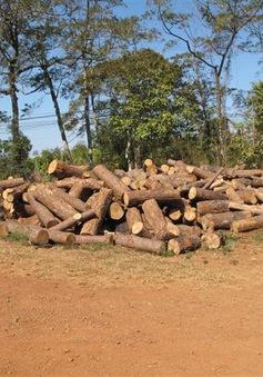 """Vụ phá rừng tại Tuy Đức, Đắk Nông: Khởi tố, tạm giam một đối tượng về tội """"đưa hối lộ"""""""